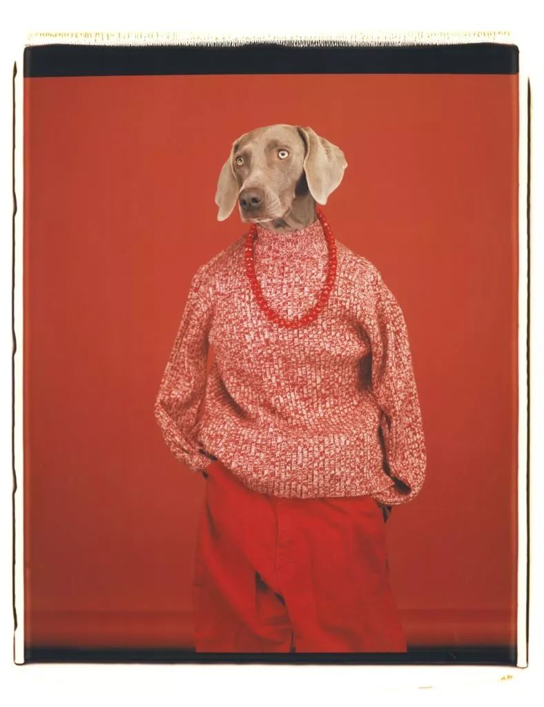 William Wegman,《休闲》(Casual),2002。图片: Courtesy of the artist and Sperone Westwater Gallery