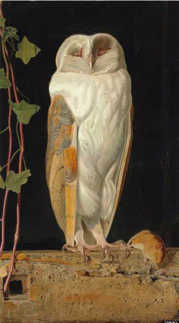 "威廉·詹姆斯·韦伯,《The White Owl,""Alone and warming his five wits, The white owl in the belfry sits"