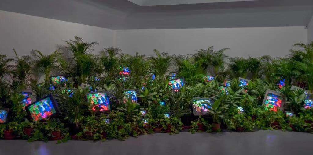 白南准(Nam June Paik),《TV-Garden》 (1974)。图片:由© Estate Nam June Paik提供